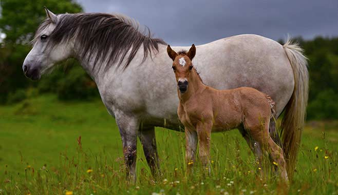 horse with her baby