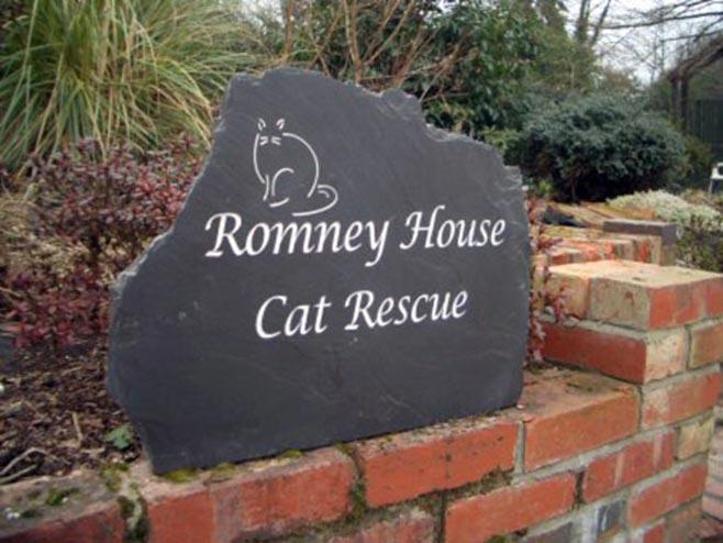 cat rescue signage