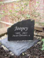 cat memorial for joopey the cat with message sweet dreams 01 thumbnail