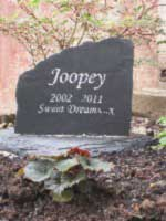 cat memorial for joopey the cat with message sweet dreams 02 thumbnail