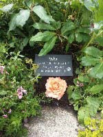 dog memorial for velvi with written message always at my side